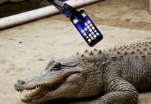 iphone  vs aligator