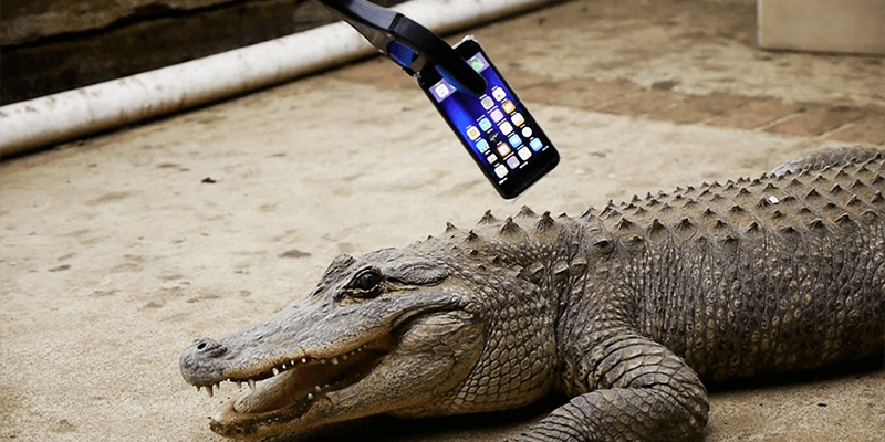 iphone 7 vs alligator