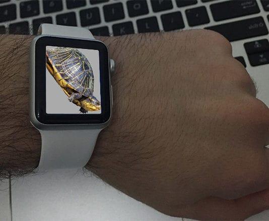 apple watch slow